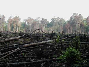 burned_forest.jpg