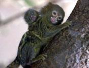 monkey7.jpg