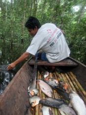 piranha_fishing.jpg