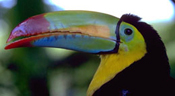 toucan21.jpg