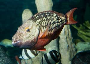 Spotlight Parrotfish Bahamas Project