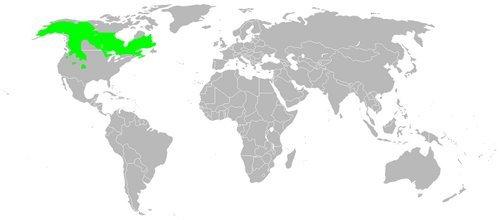 Canadian Lynx Map