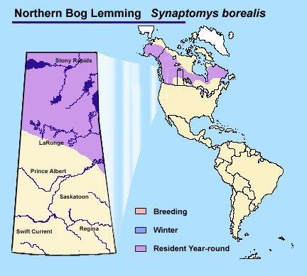 Northern Bog Lemming Map
