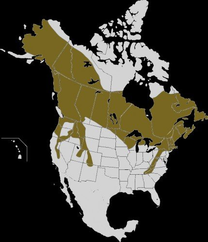 Snowshoe Hare Map