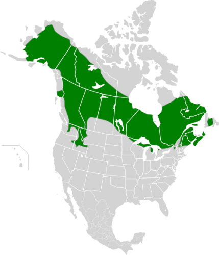 Spruce Grouse Map