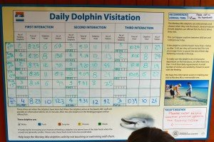 Dolphin feeding chart - we did the ones on Thursday the 12th
