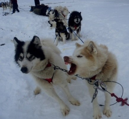 When two sled dogs argue, the sled doesn't go anywhere.